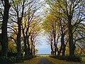 Driveway of grandior.jpg