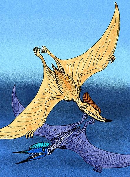 File:Dsungaripterus weii.jpg