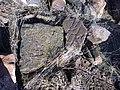 Dzagavank (cross in wall) (8).jpg