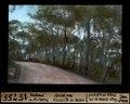 ETH-BIB-Palma de Mallorca, Wald am Castillo de Belver-Dia 247-15755.tif