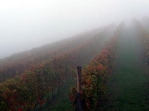 Il nebbiolo e la nebbia