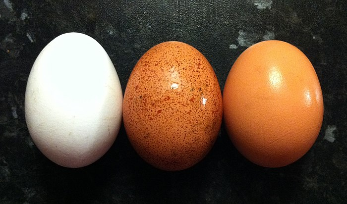 Egg colours.jpg
