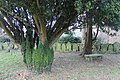 Eglwys Crist, Christ Church, yr Orsedd, Rossett, Wrecsam, Wrexham 23.jpg