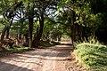El Sabinal, Aguascalientes (20906674938).jpg