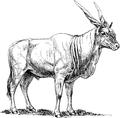 Eland 1 (PSF).png
