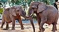 Elefantes (50360322).jpeg