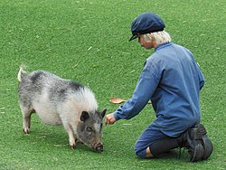 Emil and pig, Astrid Lindgrens Värld 2014.jpg