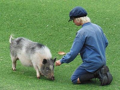 Emil i Lnneberga - Picture of Astrid Lindgrens Worlds guest