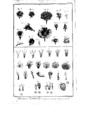 Encyclopedie volume 5-162.png