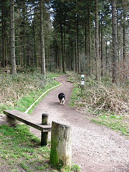 End of the All Ability Trail - geograph.org.uk - 1197409