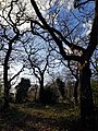 Epping Forest 20180125 150020 (49374553496).jpg