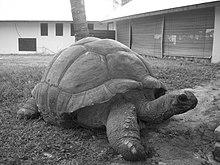 Esmeralda Aldabra Giant Tortoise Seychelles.jpg