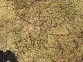 Euphorbia spp.jpg
