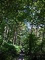 Eure-Et- Loir Droue-Sur-Drouette Sentier De La Vallee GR20 Saint Jacques De Compostelle 08072016 - panoramio (1).jpg