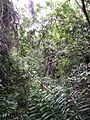 Everglades hardwood hammock.JPG