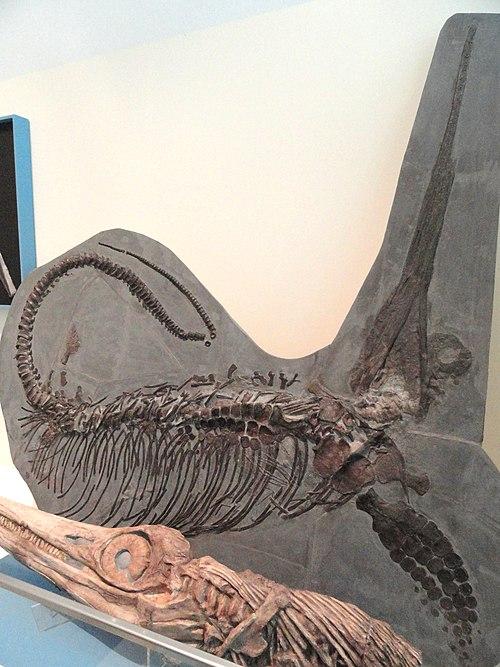 Excalibosaurus