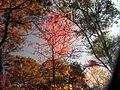 Fall at FLSP (5249378638).jpg