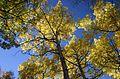 Fall colors Alaska.jpg