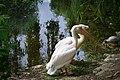 Familia de pelicani.jpg