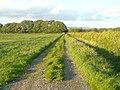 Farm Track leading back towards Crimbles Lane - geograph.org.uk - 448316.jpg