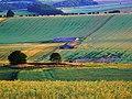 Farmland, pond and oilseed west of Baydon - geograph.org.uk - 1384757.jpg