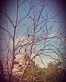 Ferrandina , sullo sfondo la Cupola della Chiesa di San Domenico.01.jpg