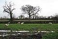 Field of sheep near Southfield Farm, south of Clevedon - geograph.org.uk - 1618317.jpg