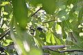 Figs 15.JPG