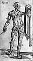 Figure with flayed skin. Wellcome L0001597.jpg