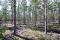 Finland - panoramio (10).jpg