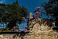 Firenze - Florence - Via di Belvedere - View East on flowering Wisteria.jpg