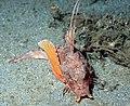 Fish3884 - Flickr - NOAA Photo Library.jpg