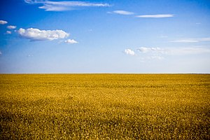Flag of Ukraine - Typical agricultural landscape of Ukraine, Kherson Oblast