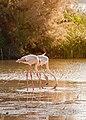 Flamencos en la laguna.jpg