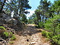 Flickr - ronsaunders47 - DIRT TRACK IN THE FOREST. LESBOS..jpg