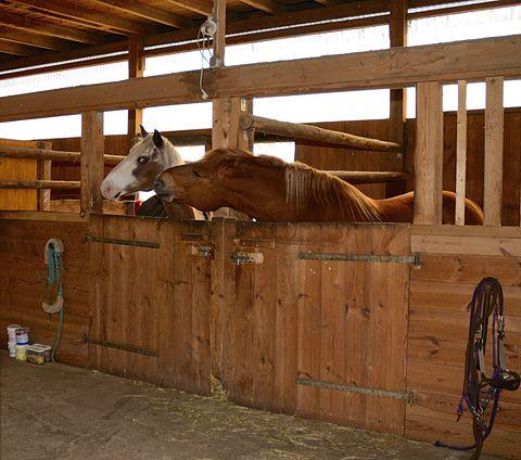 Flirtende Pferde 1338.jpg