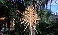 Flor de butiá.jpg