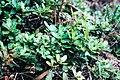Flora na Tapada do Saldanha. 11-18 (02).jpg