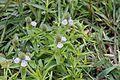 Flora of Yercaud 9923.jpg