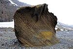 FloreAntarctique (8).jpg