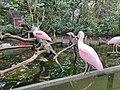 Florida Aquarium Birds.jpg