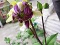 Flower20180523 101215.jpg