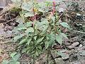 Flower plants.jpg