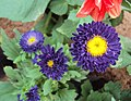 Flowers - Uncategorised Garden plants 82.JPG