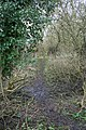 Footpath out - geograph.org.uk - 1192240.jpg