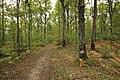 Forêt Départementale de Méridon à Chevreuse le 29 septembre 2017 - 45.jpg