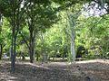 Forêt de lEtang Saint Paul (3847449031).jpg