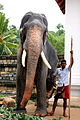 For centuries, elephants have played an important role in Sri Lanka. Here workers prepare an elephant for the island's l - Flickr - Al Jazeera English.jpg