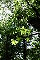 Forest @ Roc de Chère @ Talloires (35258947060).jpg
