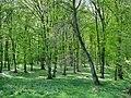 Forest - panoramio - paulnasca (96).jpg
